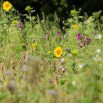 Eindrücke Bienenwiese